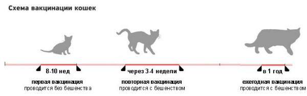 privivki_koshkam_1[1]