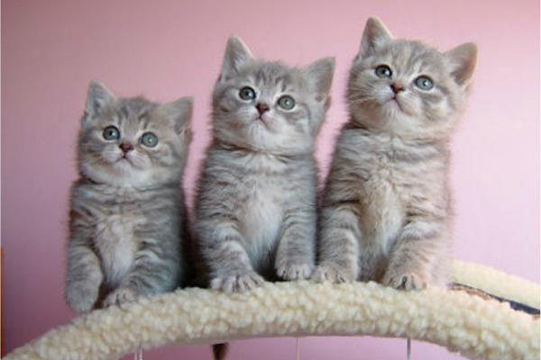 sweet-kitte1[1]
