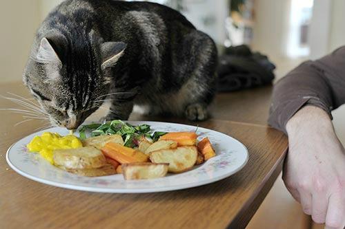 питание британских котов натуральной пищей