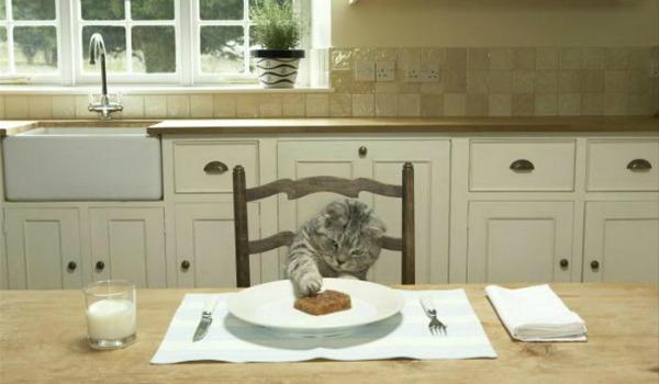 правильное питание британского кота