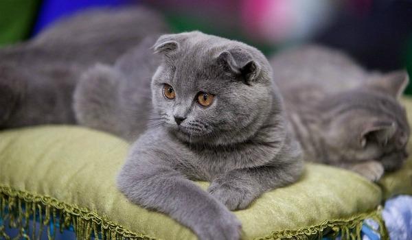 652044__adorable-cat_p[1]