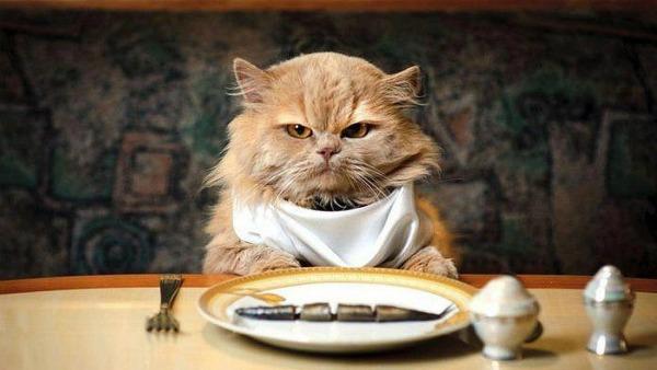 кошка ест вареную рыбу