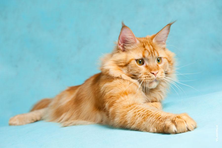 Имена котов мальчиков мейн кунов