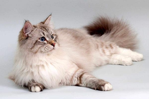 у кота невской маскарадной колтуны