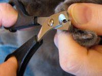 Как правильно подстричь когти кошке?