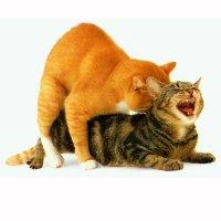 как часто можно вязать кота
