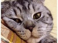 Симптомы и лечения чумки у кошек