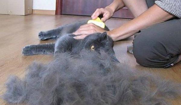 Расчесывание кошки в период линьки