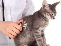Как происходит операция по кастрации кота?