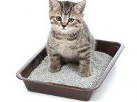 Как котенка приучить к лотку?