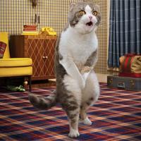 зачем кастрируют котов