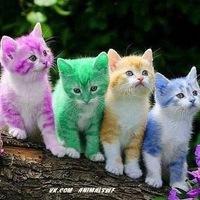 снятся много маленьких котят