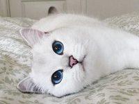 Самые известные 8 пород кошек