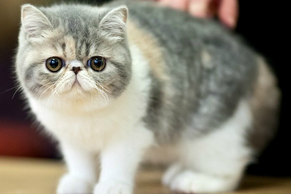Самые добрые коты в мире