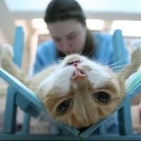 возраст для кастрации кота