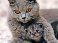 К чему же снятся кошки и котята?