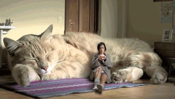фото самой большой кошки