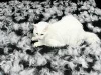 Что необходимо делать если кошка сильно линяет?