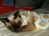 Что делать если кошка после стерилизации вялая и много спит?