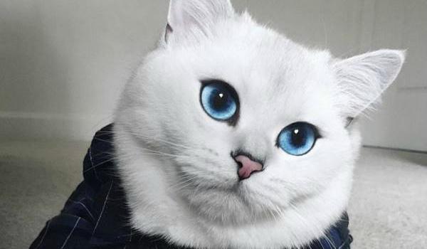 Породы кот с большими глазами