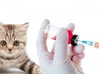 График прививок для котят