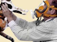 Гипоаллергенные породы кошек — их виды