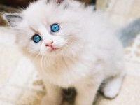 Как воспитывать котенка — советы от заводчиков