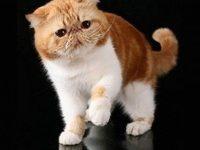 Популярные породы кошек с названиями и фотографиями