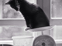 Сколько весит котенок в 1,2,3,4,5 и 6 месяцев?