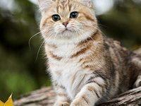 Как красиво назвать кота мальчика серого цвета?