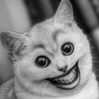 приколы с кошками видео смеяться до слез