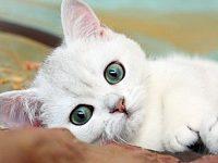 Самые популярные клички для котов