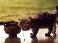Почему котенок не пьет воду?