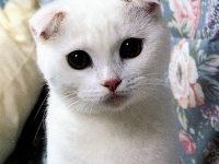 ТОП 10 самых красивых пород кошек
