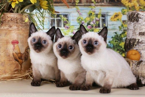 Фото самых маленьких котов