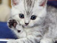 Как можно красиво назвать котенка мальчика?