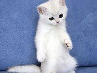 Красивые клички для кошек девочек