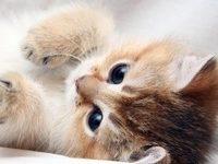 Развитие котенка по неделям и месяцам