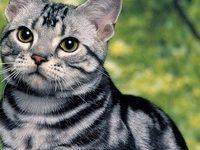 30 короткошерстных пород кошек с фотографиями и названиями