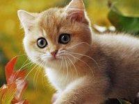Самые добрые породы кошек в мире