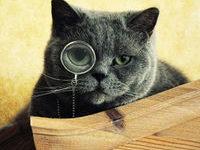 Какая самая умная порода кошек?