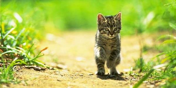 Имя для котёнка девочки рыжего цвета