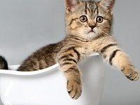 Как правильно купать кота и не получить стресс?