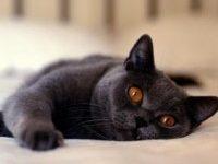 Как можно красиво назвать кошку?