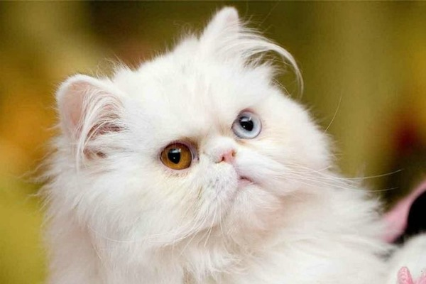 Кот с белыми глазами картинки