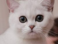 Самые лучшие породы кошек