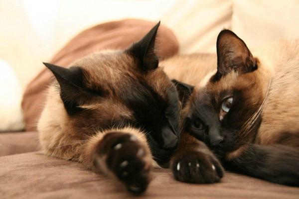 Неласковые коты