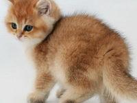 Как можно прикольно назвать котенка мальчика?