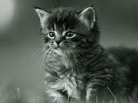 Как можно прикольно назвать котенка девочку?