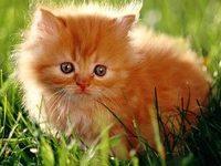 Как можно назвать рыжего котенка мальчика?